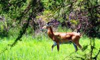 antelope-murchison-falls-national-park.jpg