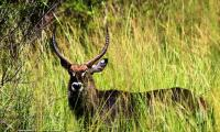 waterback_murchison falls national park.jpg